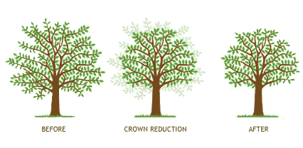 crown-reduction