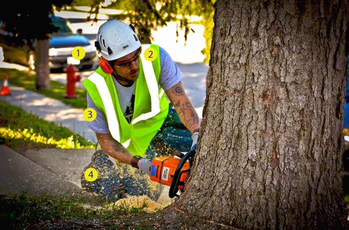 Protective gear demonstration by arborist