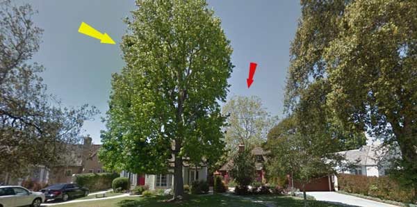tree location on property