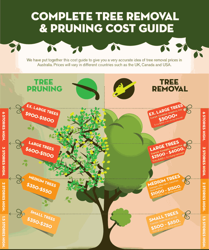 tree removal cost guide infographic