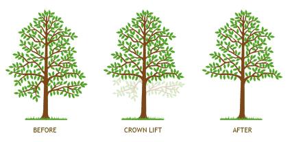 crown lift diagram