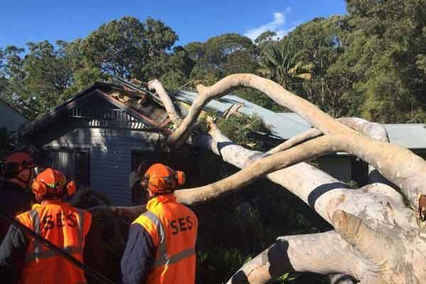 tree fallen on home in storm