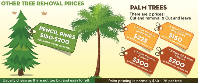 Palm Removal Cost Guide Infographic