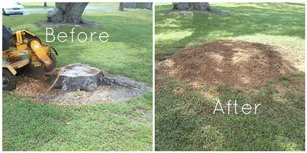 stump grinding before and after