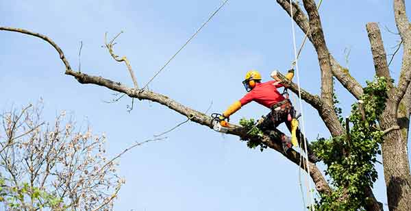 Tree pruning in melbourne