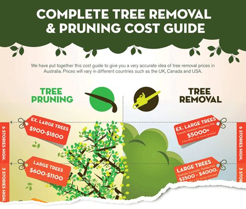 Tree Removal Sydney Cost Explained