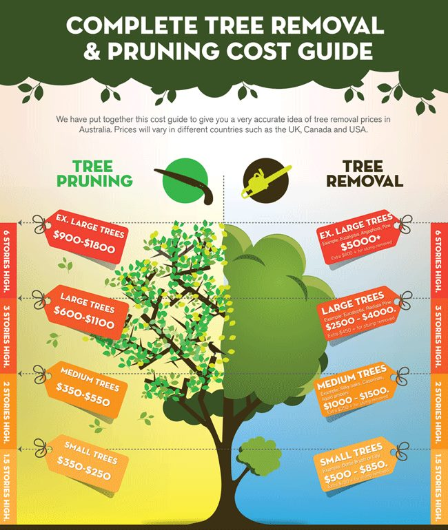 The cost of tree removal in Sydney
