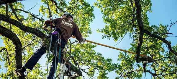 tree pruning perth wa