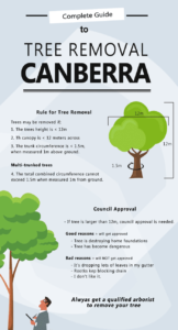 tree removal and lopping inforgraphic