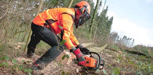 PPE Personal Protective Equipment for Tree Removal
