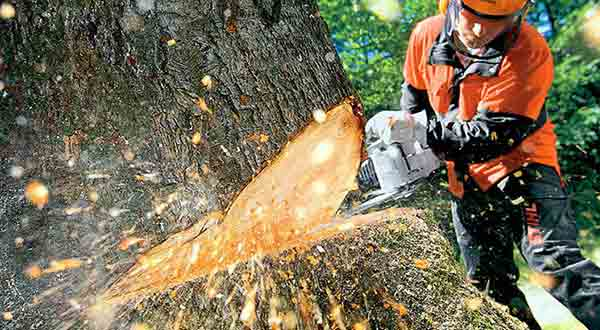 arborist performing tree surgery