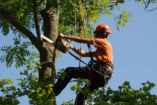 arborist quoting job