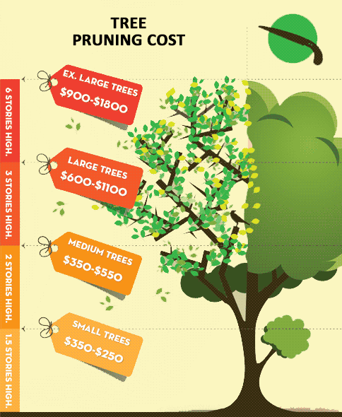 Tree Pruning Cost Infographic