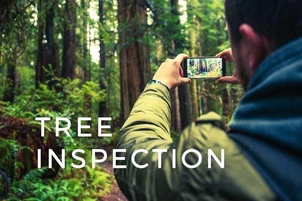 tree-arborist-report-cost