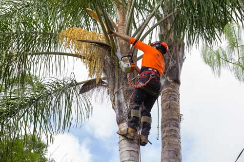 Arborist in Melbourne removing a palm tree