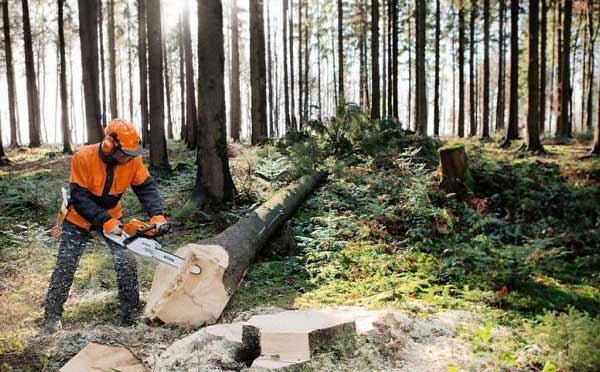 tree-felling-in-forest