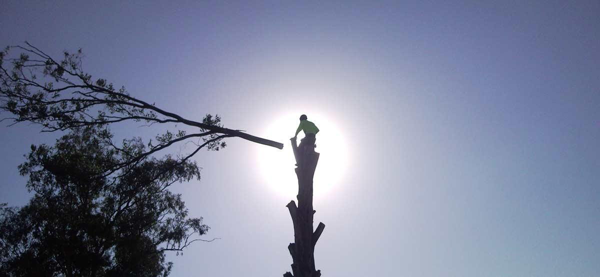 tree-felling-in-croydon-melbourne-vic