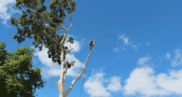 tree-removal-perth-hills-WA
