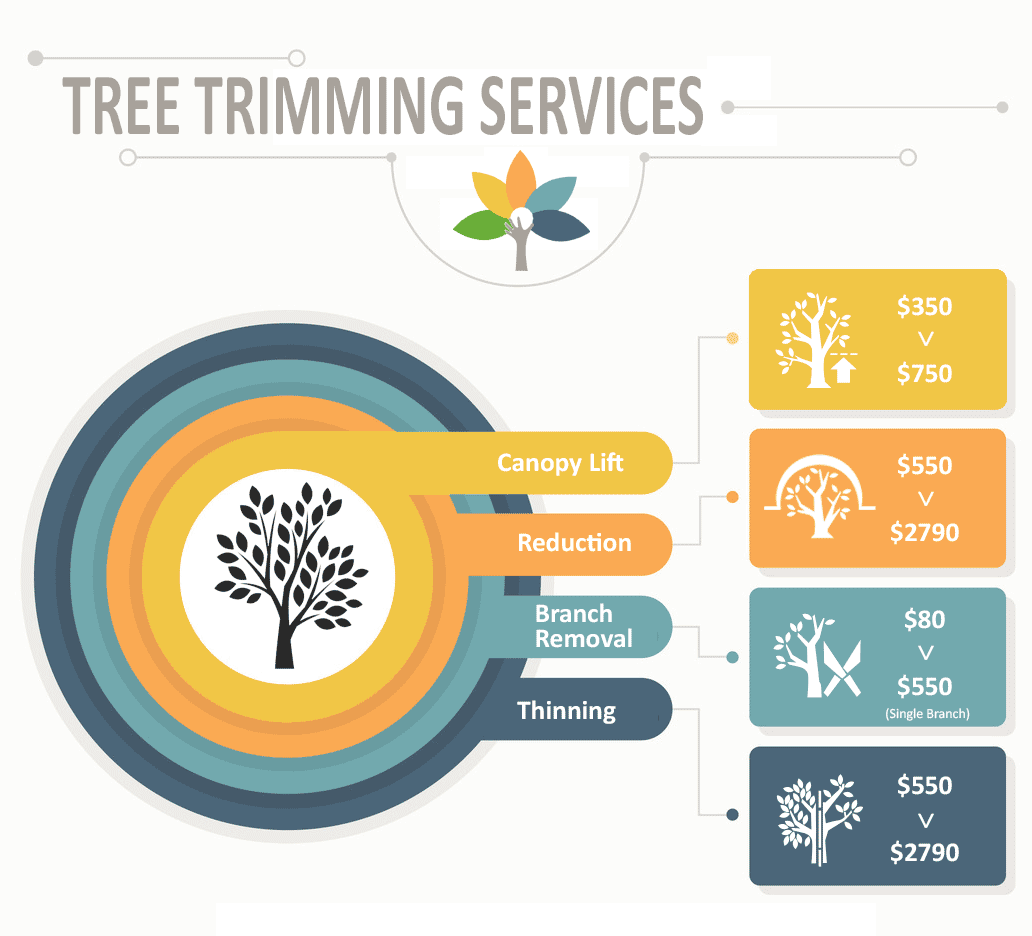 tree-trimming-service-infographic