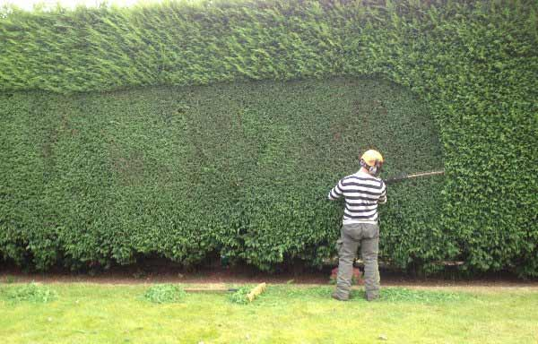 hedge-trimming-with-hedgehog