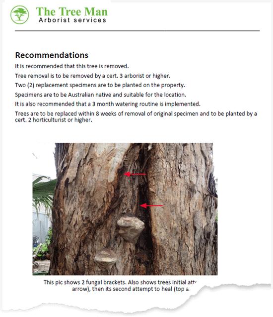 arborist-report-example-image-1