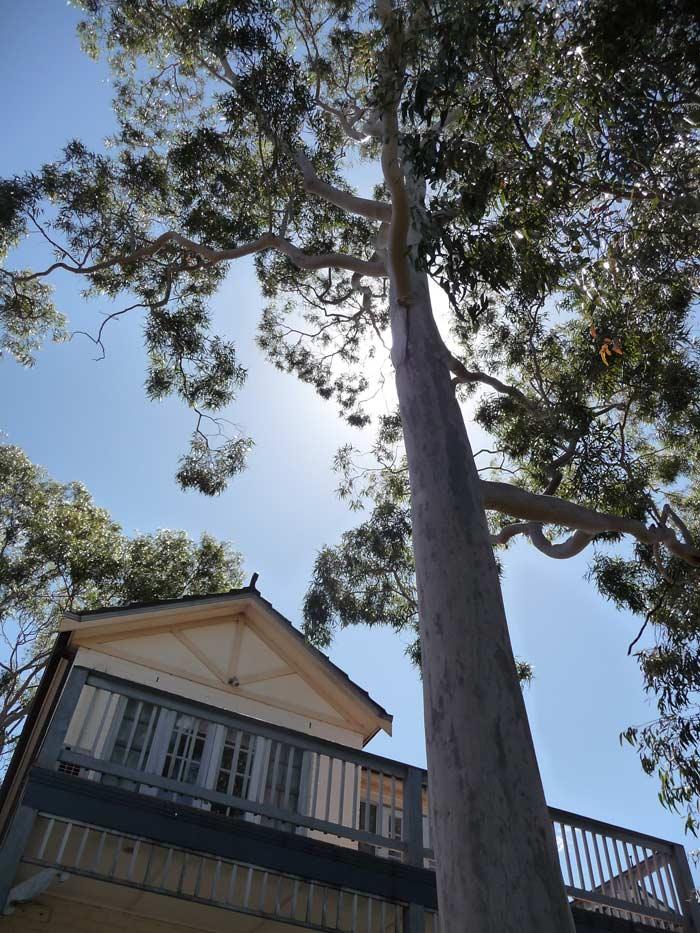 gum-tree-trim-cost-example