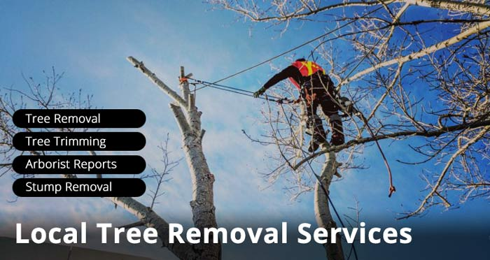 local-tree-removal-services