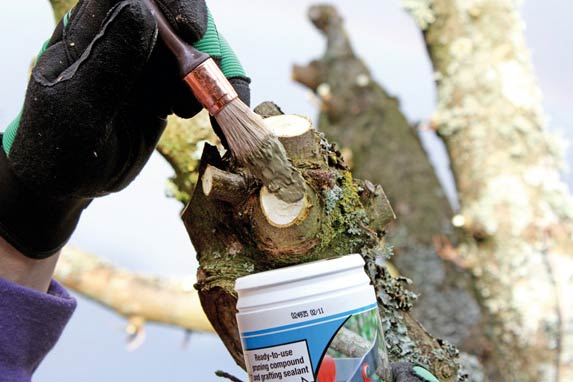 Tree-pruning-sealer-being-applied