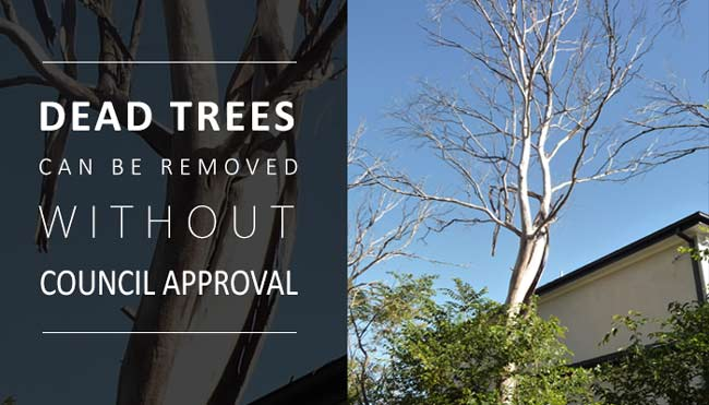 dead-trees-can-be-removed-without-council-approval