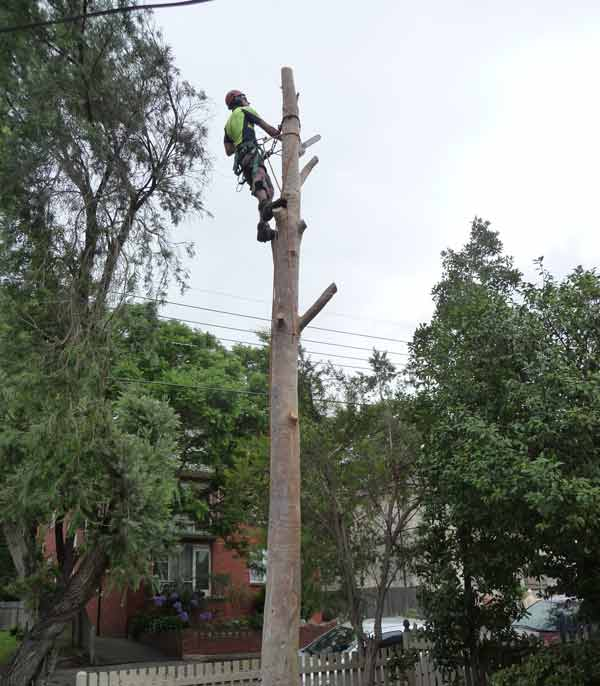 removing-a-tree-after-council-approval