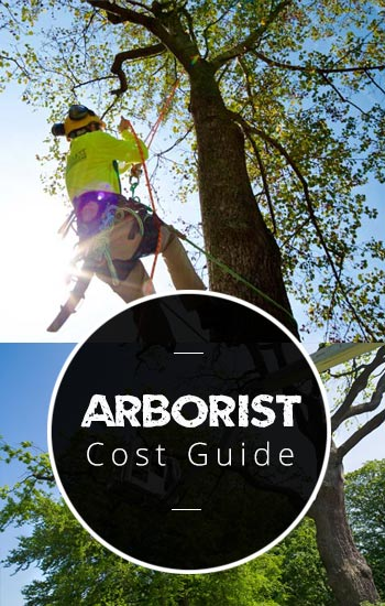 arborist-cost-guide-AUS