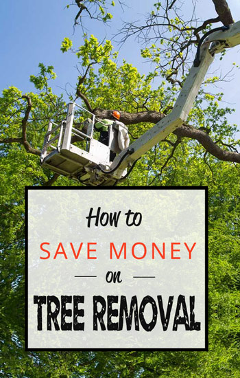 how-to-save-on-tree-removal-AUS