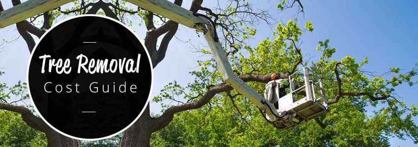 tree-removal-cost-guide-850-x-300-AUS