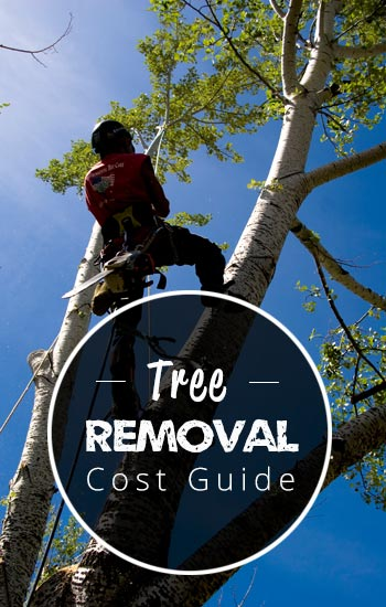 tree-removal-cost-guide-AUS