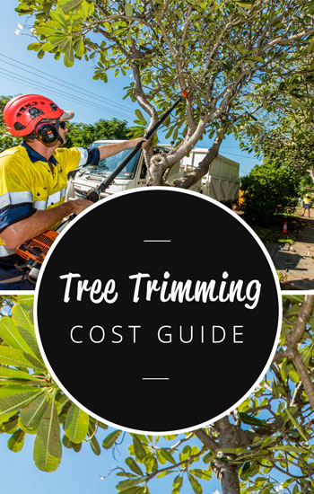tree-pruning-cost-guide-350-x-550
