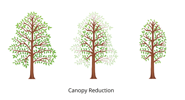 canopy-tree-reduction-vector