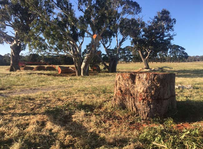mt-barger-red-gums-removed1