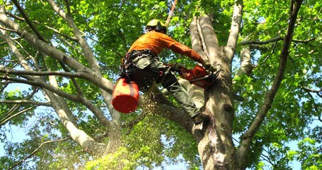 Certified-arborist-Adelaide