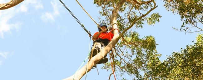 arborist-trimming-tree-in-perth-WA