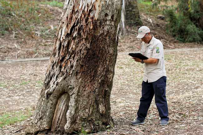 arbrosit-in-Sydney-making-notes-on-tree