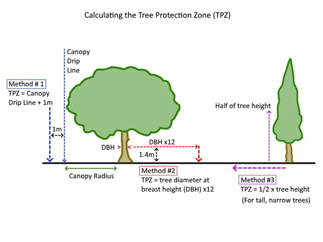 tree-protection-zones-explained