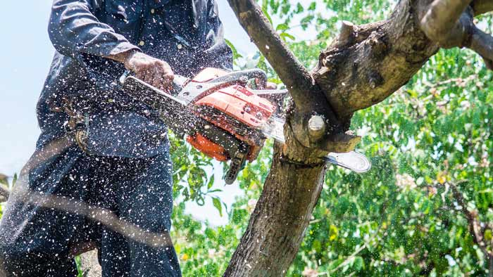 tree-removal-in-adelaide