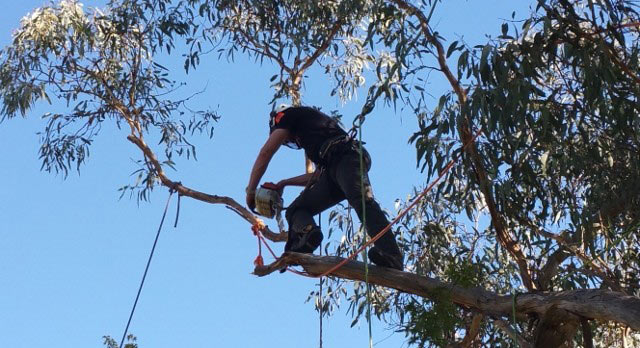 tree-removal-by-arborit-in-canberra