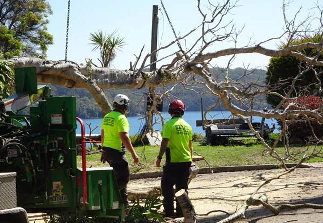 Tree-lopping-in-blacktown-nsw