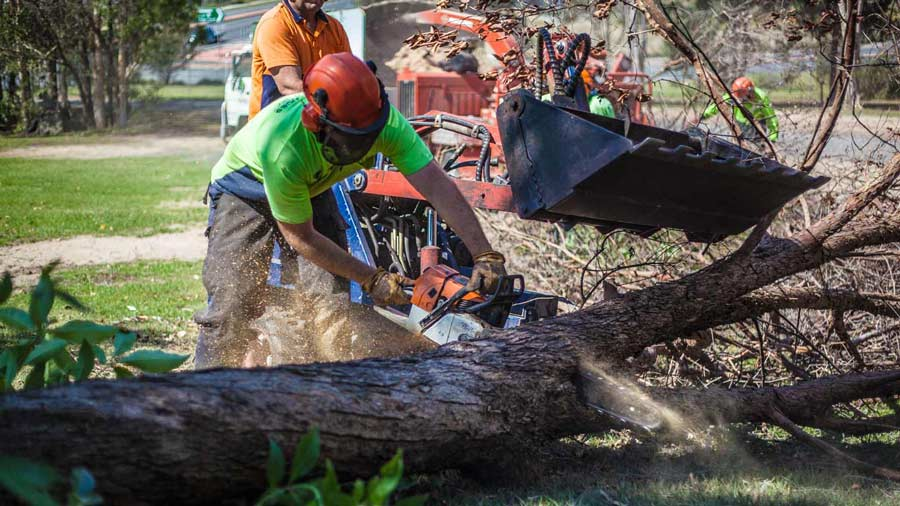 Tree-removal-Redland-City-Brisbane-2
