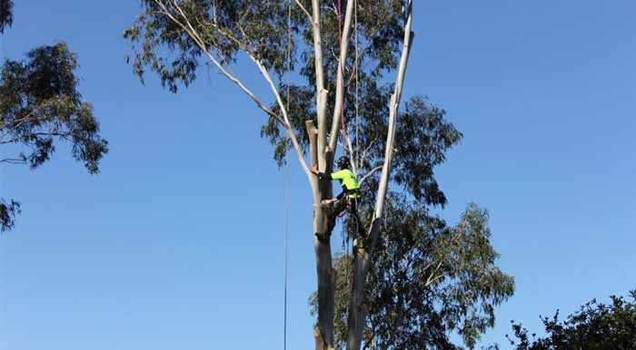 tree lopping in Boroondara council area melbourne vic