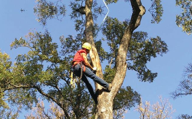 tree-removal-casey-vicotira