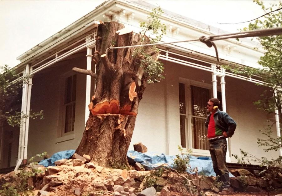 tree removal darebin council trunk removal