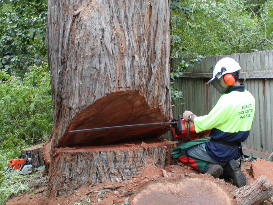 Tree removal Hornsby Council cutting down a tree