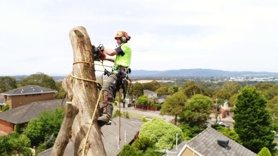 tall over roofs tree removal Greater Dandenong council